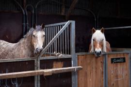 De paardenstallen